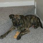 Riley, Missing Puppy